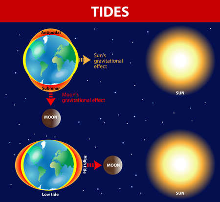 Tides depend where the sun and moon are relative to the Earth. Gravity and inertia creating tidal bulges on opposite sides of the planet. The gravitational force of the moon pulls the ocean's waters toward it, creating bulge. On the far side of the Eart Vector