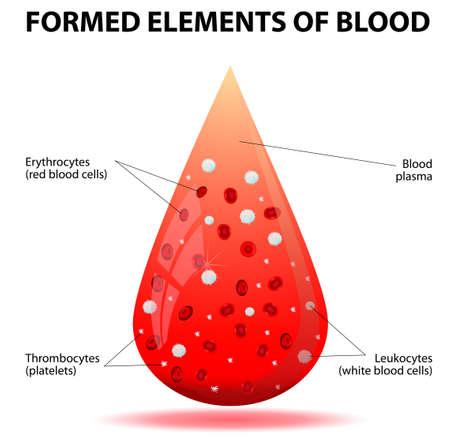 Een druppel bloed Gevormd elementen van het bloed Bloedcellen bloedplaatjes, erytrocyten, leukocyten, trombocyten
