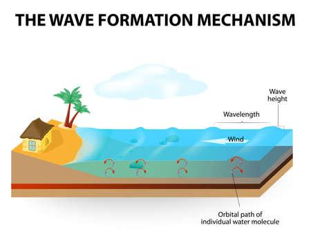 oceanography: Le onde sono formate dal vento che soffia sulla superficie dell'acqua. Onde di acqua non si muovono orizzontalmente, si muovono solo su e gi� (onda non rappresenta un flusso di acqua).