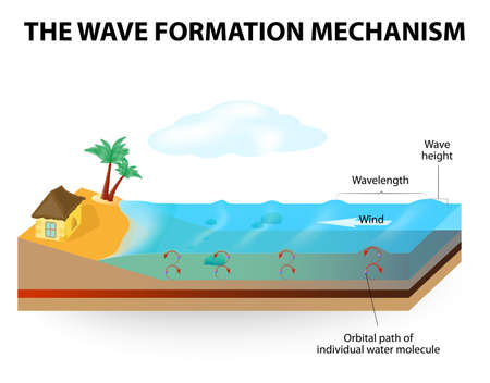 transferred: Waves are formed by wind blowing along the waters surface. Waves of water do not move horizontally, they only move up and down (a wave does not represent a flow of water).  Illustration