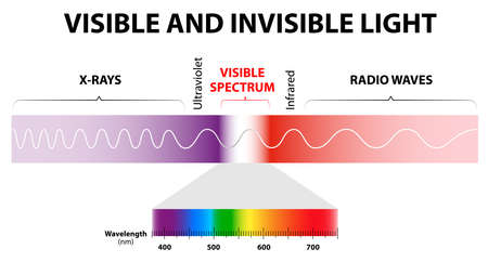 The spectrum of waves includes infrared rays,  visible light, ultraviolet rays, and X-rays. Human eyes are only sensitive to the range that is between wavelength 780 nanometers and 380 nanometers in length. Stock Vector - 24756049