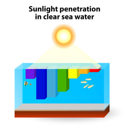 penetration: Why is Water Blue? Water absorbs warm colors a long wavelength light and scatters the cooler colors (short wavelength light). Red light is absorbed strongly and blue light has the deepest penetration depth.