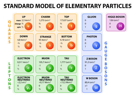 Diagram of the Standard Model of particle physics. 12 fundamental particles that make up matter and 4 fundamental force carriers.  Stock Vector - 24987995