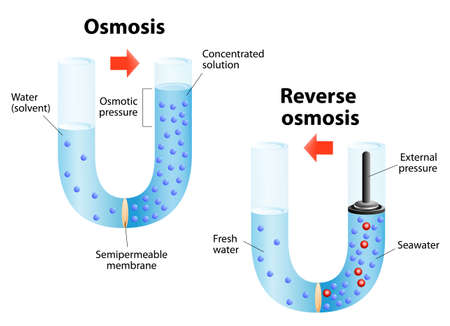 Osmosis - diffusion of fluid through a semipermeable membrane from a solution with a low solute concentration to a solution with a higher solute concentration. Reverse osmosis is a water purification technology Vector