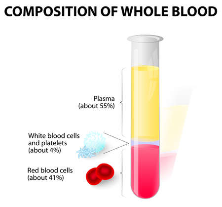 body blood: blood plasma and formed elements in test tube Illustration