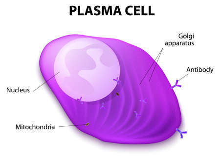 receptors: Structure of the Plasma cell
