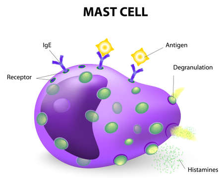 histamine: white blood cell. mast cell or a mastocyte, labrocyte. mast cells are the cells responsible for causing allergic reactions or anaphylaxis, also aide in the healing of wounds and defense against invading pathogens.