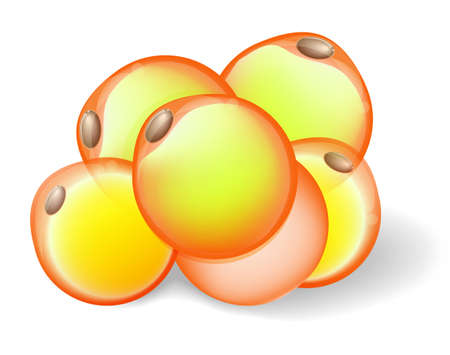 Las células de grasa del tejido adiposo blanco.
