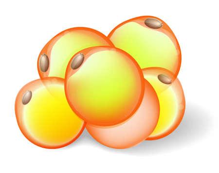 cellulit: Zsírsejtek fehér zsírszövet. Illusztráció