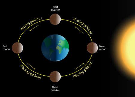cycles: phase de la lune La relation des phases de la Lune avec sa r�volution autour de la Terre Illustration
