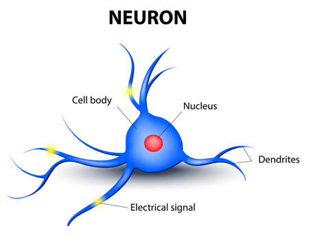 neuron cell body: human nerve cell on a white background Illustration