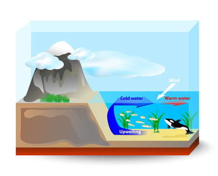 upwelling currents bring cold, nutrient-rich water up from the ocean floor to the surface, support the growth of plankton and seaweed which are the food for fish and marine mammals Vector