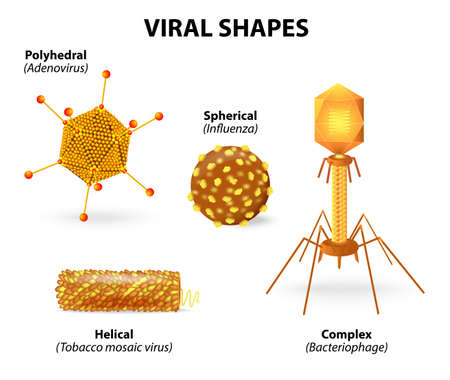 bacterial: viral shapes. Vector illustration showing that there are many different shapes and sizes of viruses.