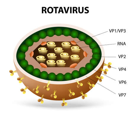glycoprotein: rotavirus or rota virus virion. Rota virus causing acute gastroenteritis in birds, mammals and humans.