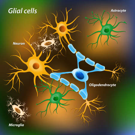 neuron cell body: glial cells on the color background. Medical and sciense illustration Illustration