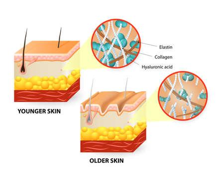 Visuele weergave van de veranderingen van de huid dan een mensenleven. Stock Illustratie