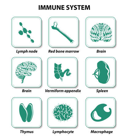human immune system: set icons. Immune system. internal human organs. Illustration