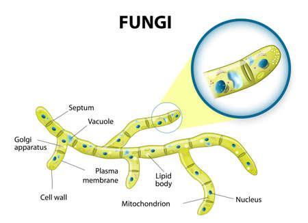 Fungi Diagram Gcse Worksheet And Wiring Diagram