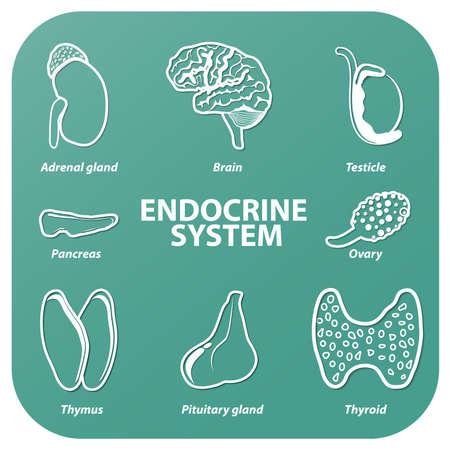 hormonas: Fije los iconos con la sombra. Vector. Órganos humanos. Sistema endocrino (glándula pituitaria, glándula pineal, testículo, ovario, páncreas, tiroides, el timo, glándula adrenal). Vectores