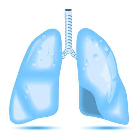 pulmon sano: pulmones humanos. Un concepto para los pulmones sanos. Los pulmones como agua cristalina Vectores