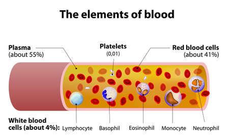 cells: The elements of blood. blood vessel cut section. Illustration