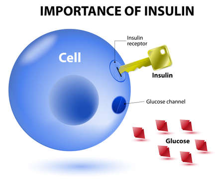 insulin acts as the key which unlocks the cell to allow glucose to enter the cell and be used for energy. Insulin is a hormone secreted by the pancreas in response to elevated blood levels of glucose. Vector