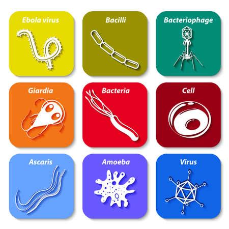 bacilli: microbes icon set. Illustration