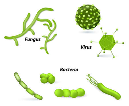 bacterial: pathogen and microbes. Virus, bacteria and fungi. Human disease