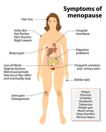 nude female: Menopause. Sign and Symptoms. Woman silhouette with highlighted internal organs.