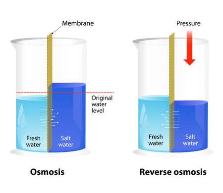 filtración: Diferencia entre la ósmosis y ósmosis inversa. El agua que pasa a través de una membrana semi-permeable Vectores