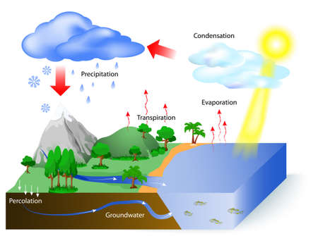 transpiration: Water cycle diagram. The sun, which drives the water cycle, heats water in oceans and seas. Water evaporates as water vapor into the air. Labeled Illustration