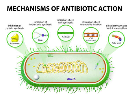 antibiotic. Mechanisms of action of antimicrobials Stok Fotoğraf - 46978345