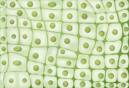 organelle: Cell division background Illustration