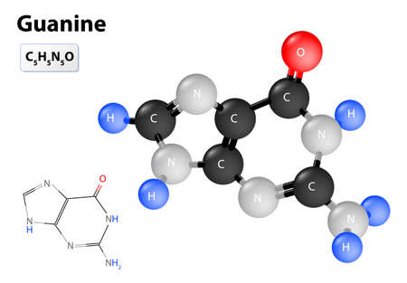 structural formula: guanine molecule. Chemical structural formula and model of guanine Illustration