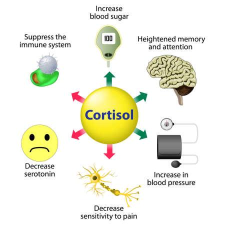 Fonctions de Cortisol. Cortisol est libérée en réponse au stress et à faible concentration de glucose sanguin.