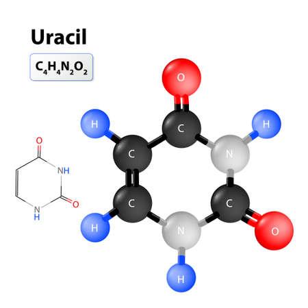 Uracile 分子構造。化学構造式と Uracile のモデル