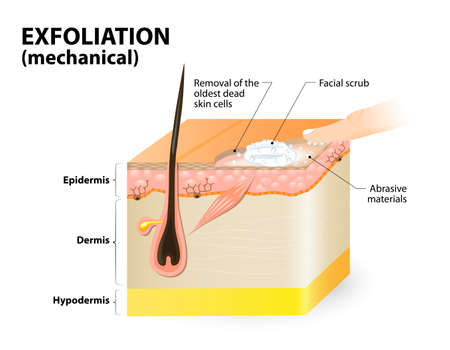 Cosmetology, Cross-section of a skin layers.