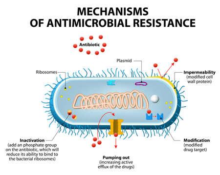 Antimicrobiële resistentie of resistentie tegen antibiotica.