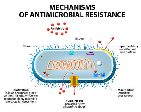 Antimicrobial resistance or antibiotic resistance. Stock Vector - 53248094