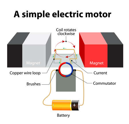 motors: simple Electric motor. A rectangular loop of wire is sitting inside a magnetic field. commutator - a circular metal ring that is split into two halves. The ends of the wire loop turn around inside the commutator. One side of the commutator is connected to