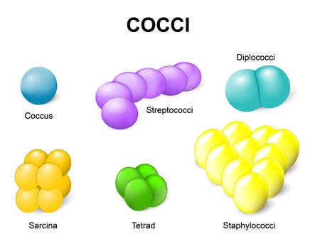 Coccus or cocci. Common bacteria infecting human.