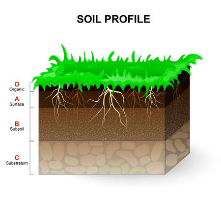 rock layer: Soil Profile and Soil horizons. Piece of land with green grass and plant roots. Vector illustration.