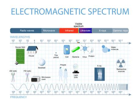 Espectro electromagnético. El espectro de las ondas incluye rayos infrarrojos, luz visible, rayos ultravioleta, y radiografías. Los ojos humanos sólo son sensibles a la gama de longitudes de onda que se encuentra entre 780 nanómetros y 380 nanómetros de longitud.