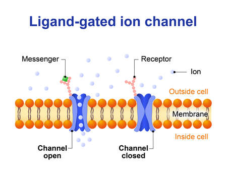 ions: Ligand-gated ion channel. channel proteins which open to ions Na, K, Ca, or Cl Illustration