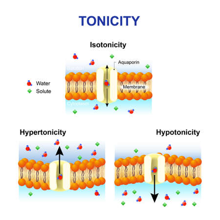 osmosis: Tonicity and osmosis. Cell membrane and aquaporin. Effect of different solutions on cell. Isotonic, Hypotonic and Hypertonic. This diagram shows the effects of hypertonic, hypotonic and istonic solutions to red blood cells.