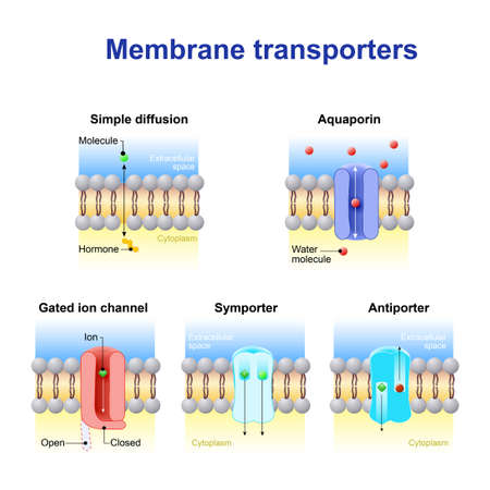 Mechanisms for the transport of ions and molecules across cell membranes. Types of a channel in the cell membrane: simple diffusion, Aquaporin, Gated ion channel, Symporter and Antiporter.