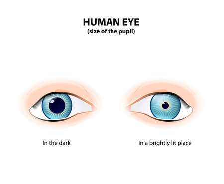 Human eye. Size of the pupil in the dark and in a brightly lit place. Pupil Dilated and Pupil constricted