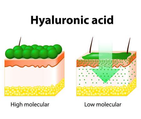acido: Ácido hialurónico. El ácido hialurónico en productos para el cuidado de la piel. Vectores