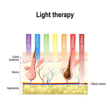 la terapia de luz, fototerapia o terapia con láser. espectro electromagnético con los colores de las diferentes longitudes de onda en la piel humana. Diferentes espectros de luz se penetrar en la piel a diferentes profundidades. La profundidad de penetración de la luz de onda Ilustración de vector