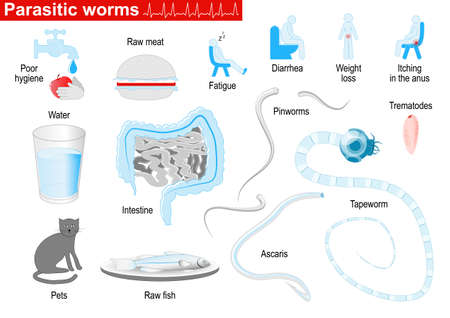 ascaris: Parasitic worms. Helminths are parasites of human. flat and round worms. Ascaris, trematodes, tapeworm, and Pinworms. Medical Infographic set with icons and other elements. symbols for design.